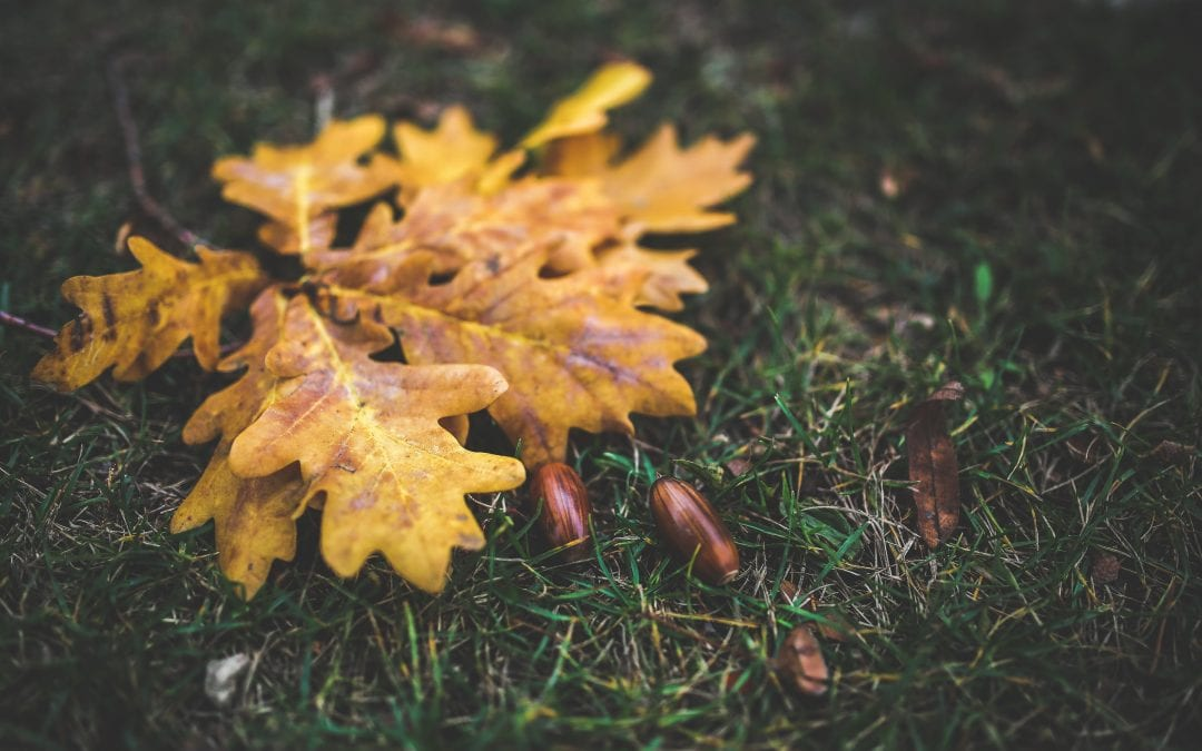 little seeds, deep roots, big trees